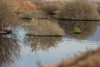 Photo Credit: Noam Weiss, SPNI Director, Eilat International Birding and Research Station