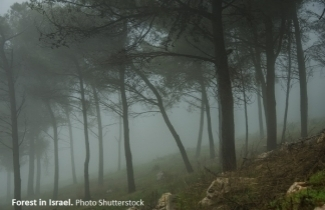 Forest in Israel