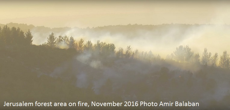 Jerusalem forest area on fire November 2016 Photo Amir Balaban