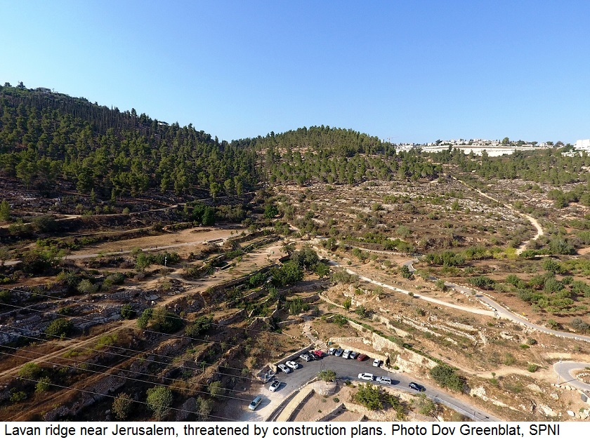 Lavan ridge near Jerusalem, threatened by construction plans. Photo Dov Greenblat, SPNI