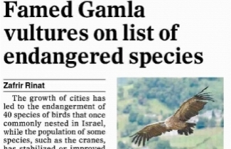 Read full article: Famed Gamla Vultures on List of Endangered Species