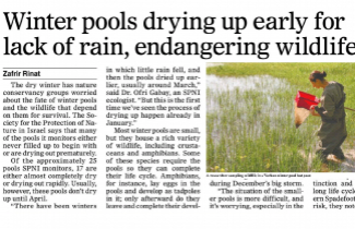 Winter pools drying early for lack of rain, endangering wildlife