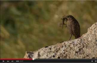 SPNI's Champions of the Flyway feature on Discovery Channel's Destination America