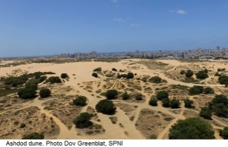 Ashdod dune, threatened by construction. Photo Dov Greenblat, SPNI