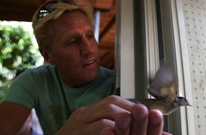 Braam Malherbe releases a newly ringed bird at SPNI's Jerusalem Bird Observatory