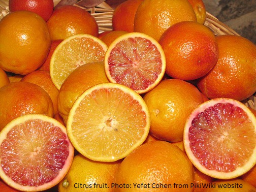 Citrus fruit Photo Yefet Cohen from PikiWiki website