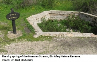 The dry spring of the Naaman Stream, Ein Afeq Nature Reserve. Photo Dr. Orit Skutelski.