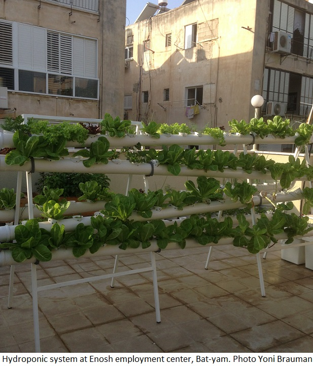 Hydroponic system at Enosh employment center Bat-yam. Photo Yoni Brauman