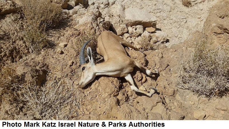 Photo Mark Katz Israel Nature & Parks Authorities