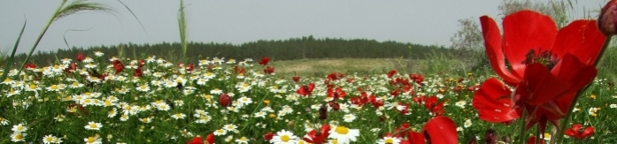 Flowering plains - the perfect site for new forests