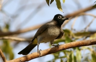 SPNI Champions of the Flyway team will once again take part in the World Series of Birding