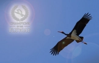 The Israel Ornithological Center presents Champions of the Flyway at the Biggest Week in American Birding