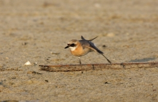 Join SPNI's expert ornithologists for a Bird Walk in Central Park NYC [Photo: Jonathan Meyrav]
